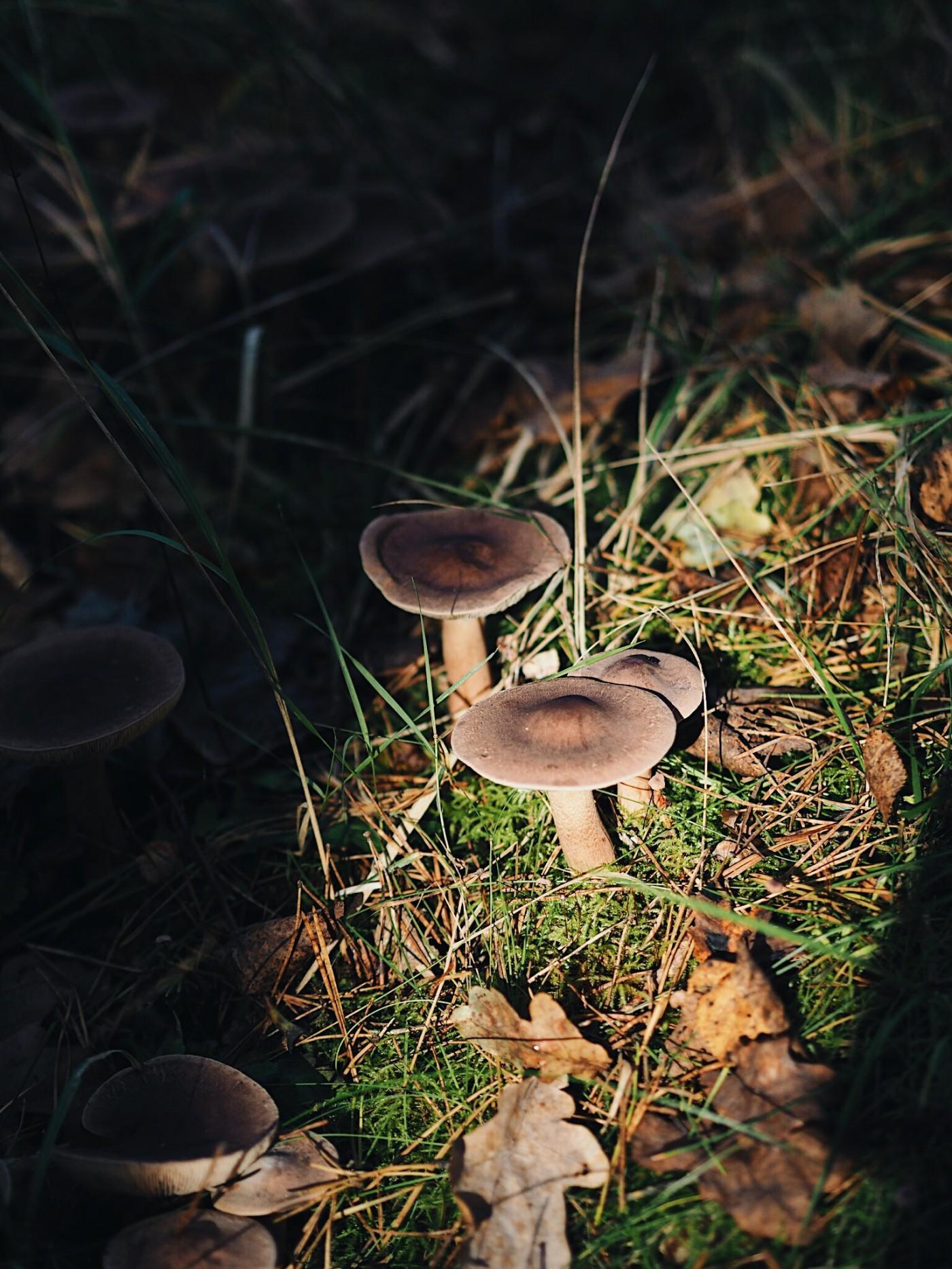 mushroom fairytale folkmagazine evafedeveka photography