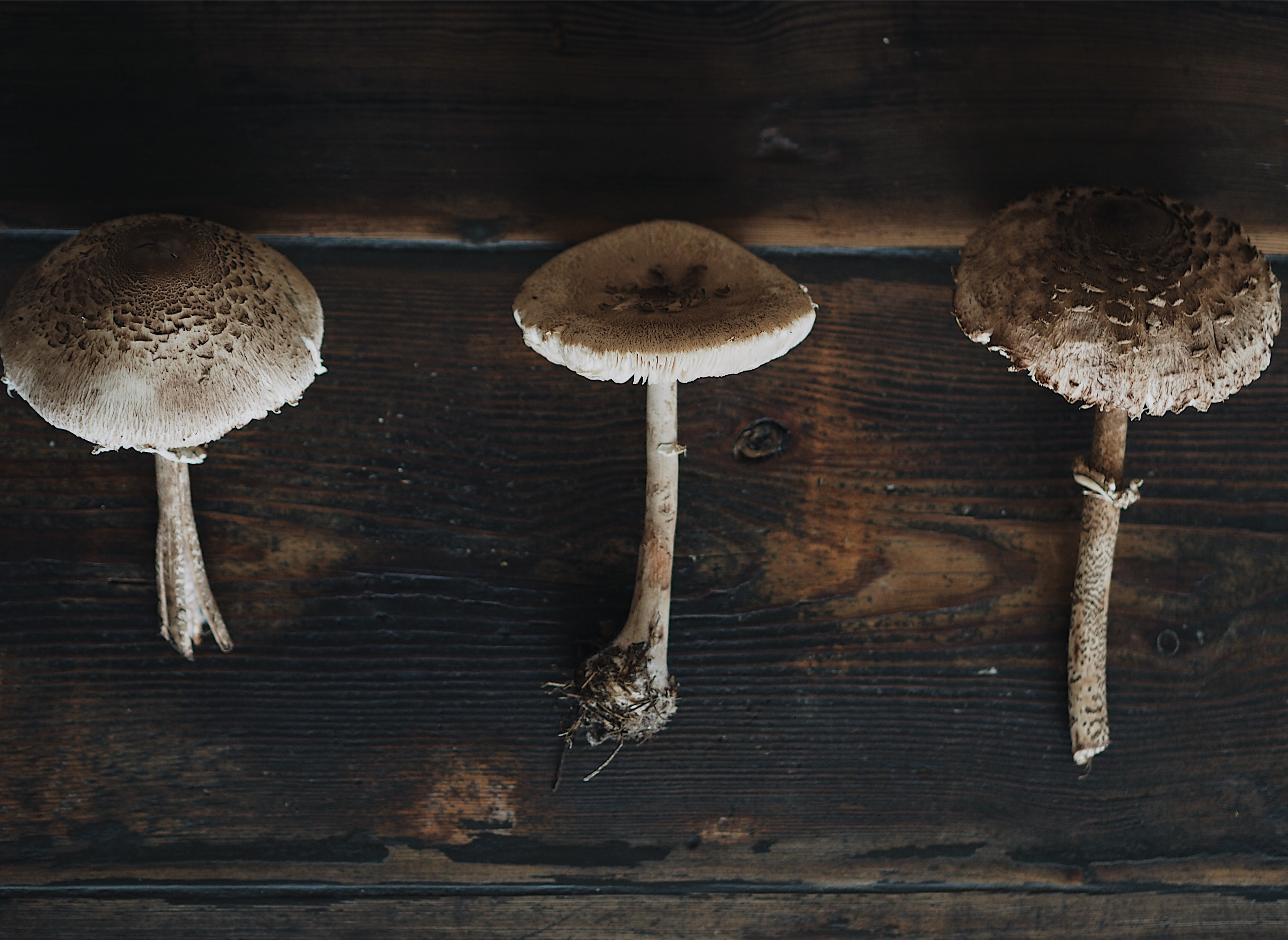 evafedeveka photography vegetarian parasol mushroom recipe homemade slowfood